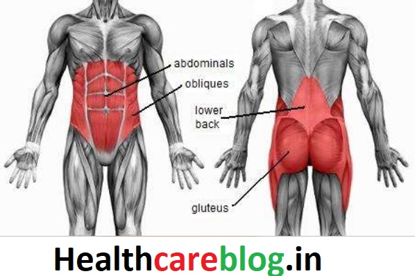 Muscles Worked During core exercises for men