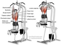 Muscles That Gains Pull Ups Benefits.